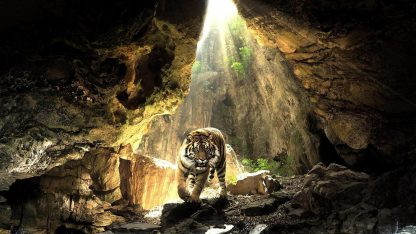 1 Panel The Tiger In Cave Multi Canvas Art