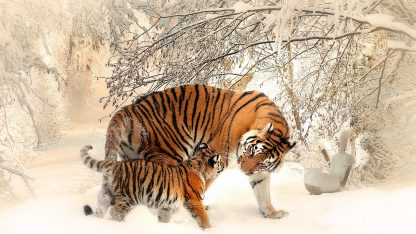 1 Panel Tiger and Cub in Snow Multi Canvas Art