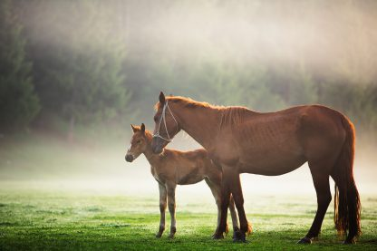 1 Panel Mare and Foal 2 Multi Canvas Art
