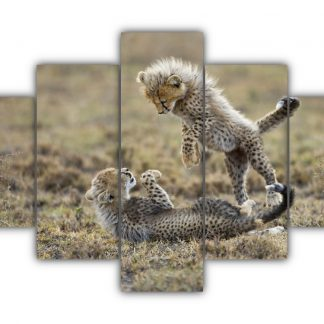 5 Panels Cheetah Cubs Multi Canvas Art