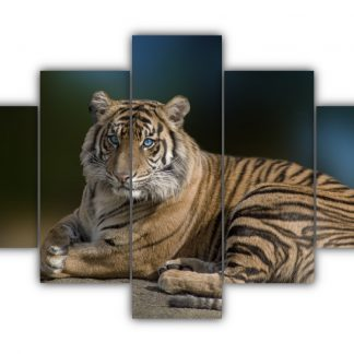 5 Panels Tiger With Blue Eyes Multi Canvas Art