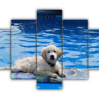 5 Panels Doggy in a Pool Multi Canvas Art