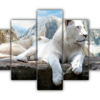5 Panels Male and female white Lions Multi Canvas Art