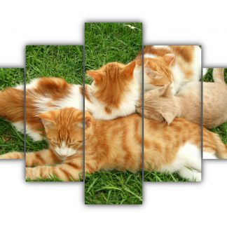5 Panels Playful Cats and Kittens Multi Canvas Art