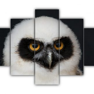 5 Panels Spectacled Owl Multi Canvas Art