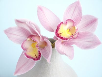 1 Panel Pink Orchid Multi Canvas Art
